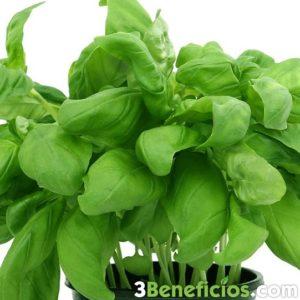 Planta pequeña de color verde