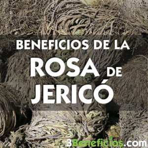 Beneficios de la rosa de Jericó